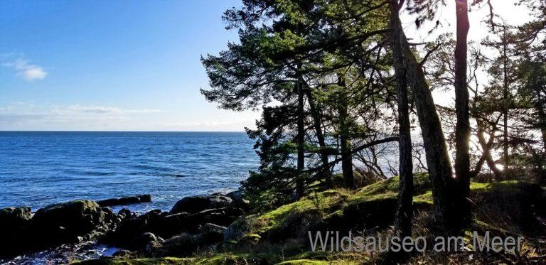 Wildsauseo am Meer